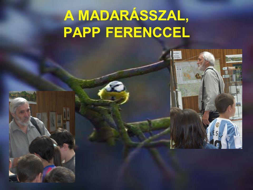 A MADARÁSSZAL, PAPP FERENCCEL