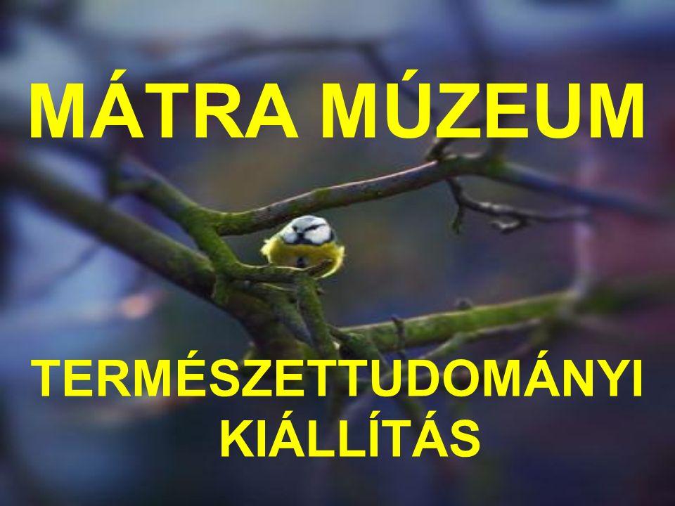 MÁTRA MÚZEUM TERMÉSZETTUDOMÁNYI KIÁLLÍTÁS
