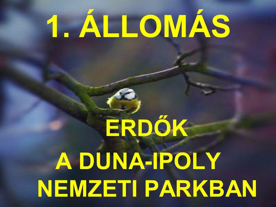 1. ÁLLOMÁS ERDŐK A DUNA-IPOLY NEMZETI PARKBAN
