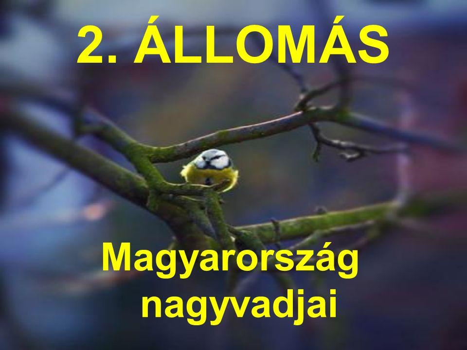 2. ÁLLOMÁS Magyarország nagyvadjai