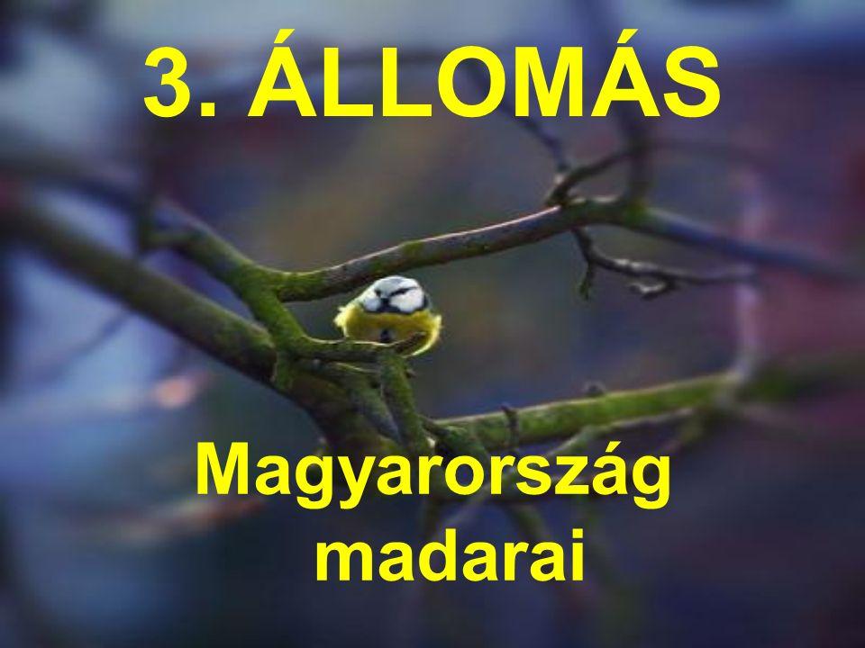 3. ÁLLOMÁS Magyarország madarai