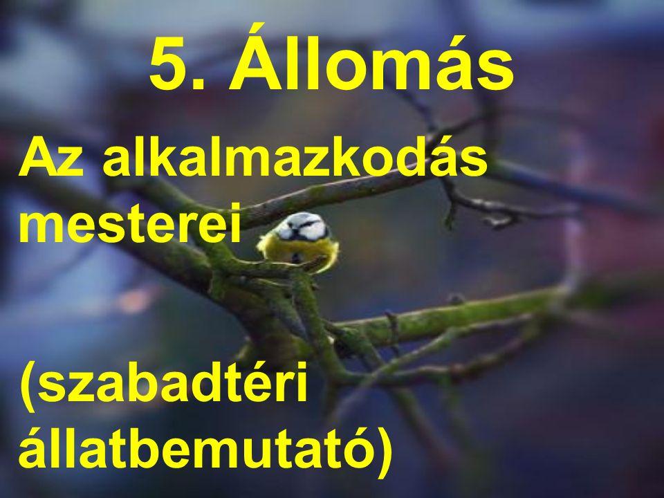 5. Állomás Az alkalmazkodás mesterei (szabadtéri állatbemutató)