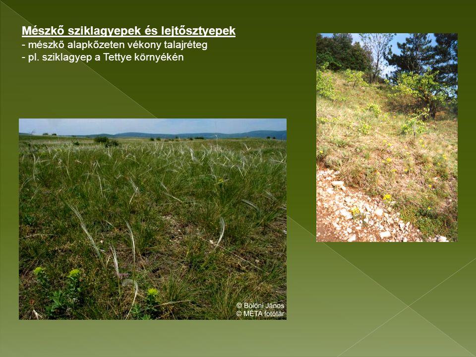 Mészkő sziklagyepek és lejtősztyepek - mészkő alapkőzeten vékony talajréteg - pl.