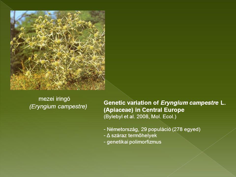 mezei iringó (Eryngium campestre) Genetic variation of Eryngium campestre L.
