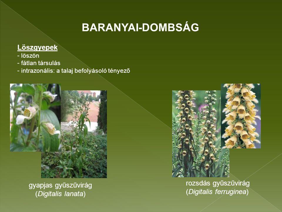 vörös áfonya orvosi veronika (Vaccinium vitis-idaea) (Veronica officinalis) szelídgesztenye (Castanea sativa) Mészkerülő (gyertyános-)tölgyesek, bükkösök