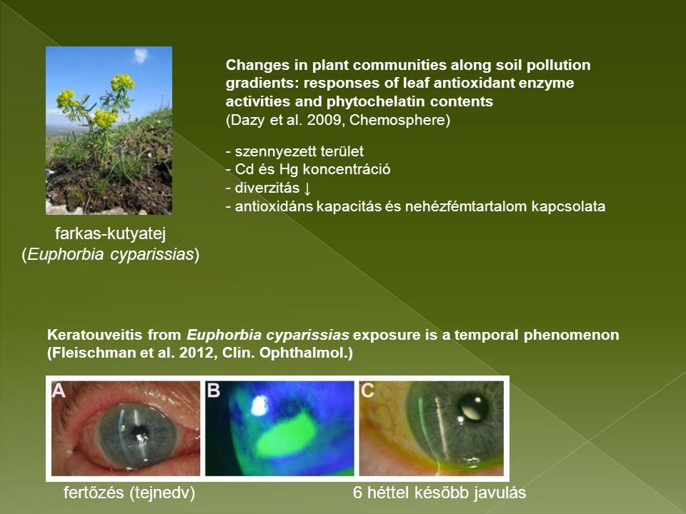 enyves éger (Alnus glutinosa) Égerligetek