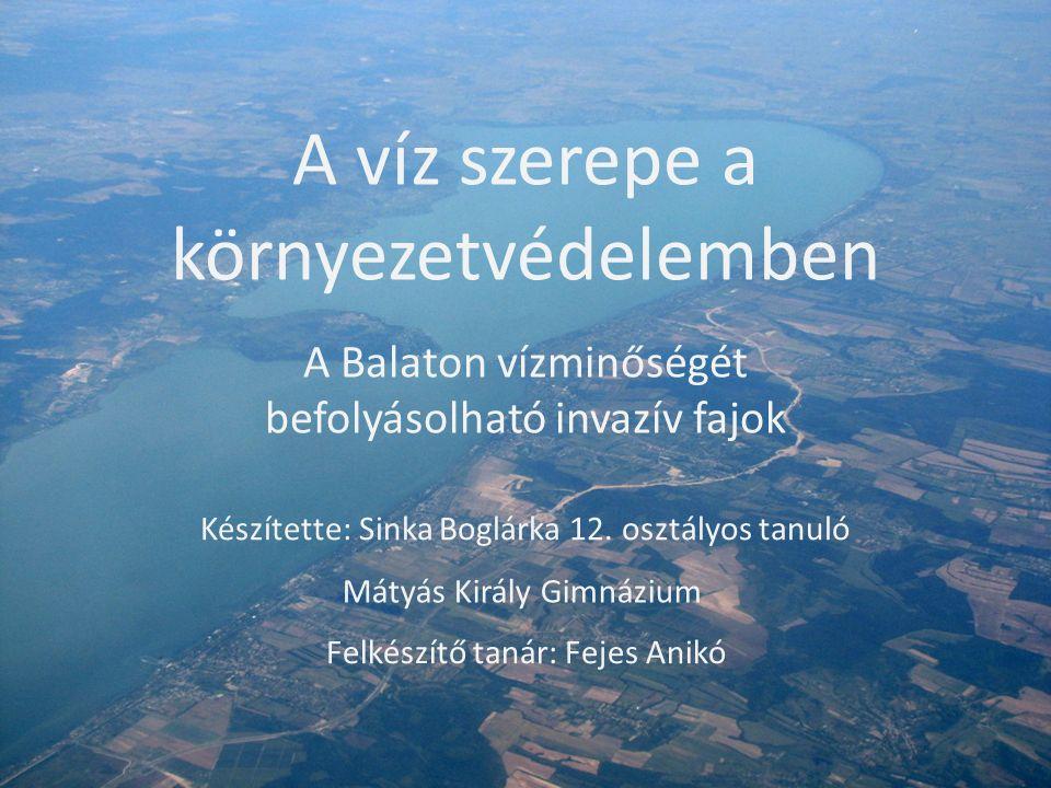 A víz szerepe a környezetvédelemben A Balaton vízminőségét befolyásolható invazív fajok Készítette: Sinka Boglárka 12.