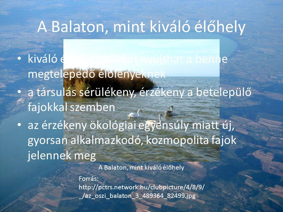 A Balaton, mint kiváló élőhely Forrás: http://pctrs.network.hu/clubpicture/4/8/9/ _/az_oszi_balaton_3_489364_82499.jpg kiváló életfeltételeket nyújthat a benne megtelepedő élőlényeknek a társulás sérülékeny, érzékeny a betelepülő fajokkal szemben az érzékeny ökológiai egyensúly miatt új, gyorsan alkalmazkodó, kozmopolita fajok jelennek meg
