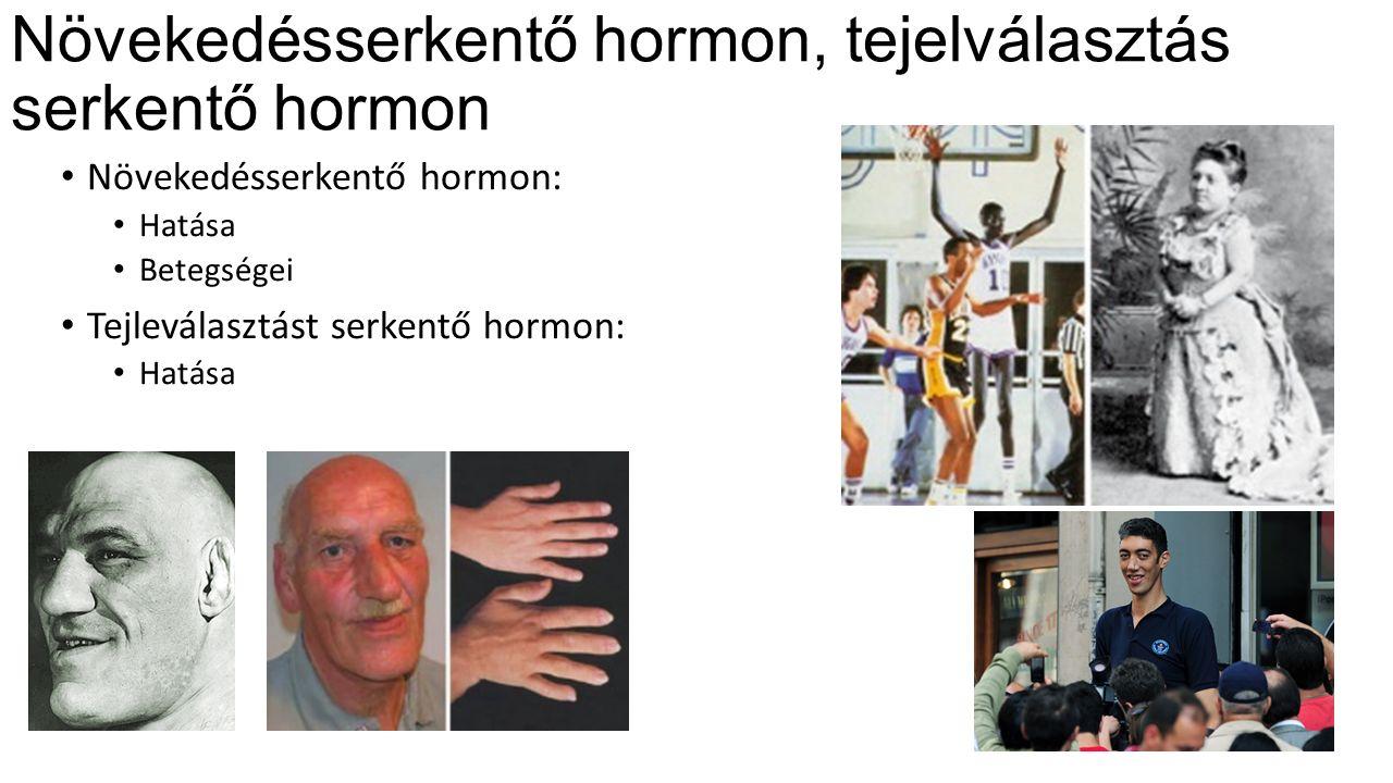 Növekedésserkentő hormon, tejelválasztás serkentő hormon Növekedésserkentő hormon: Hatása Betegségei Tejleválasztást serkentő hormon: Hatása