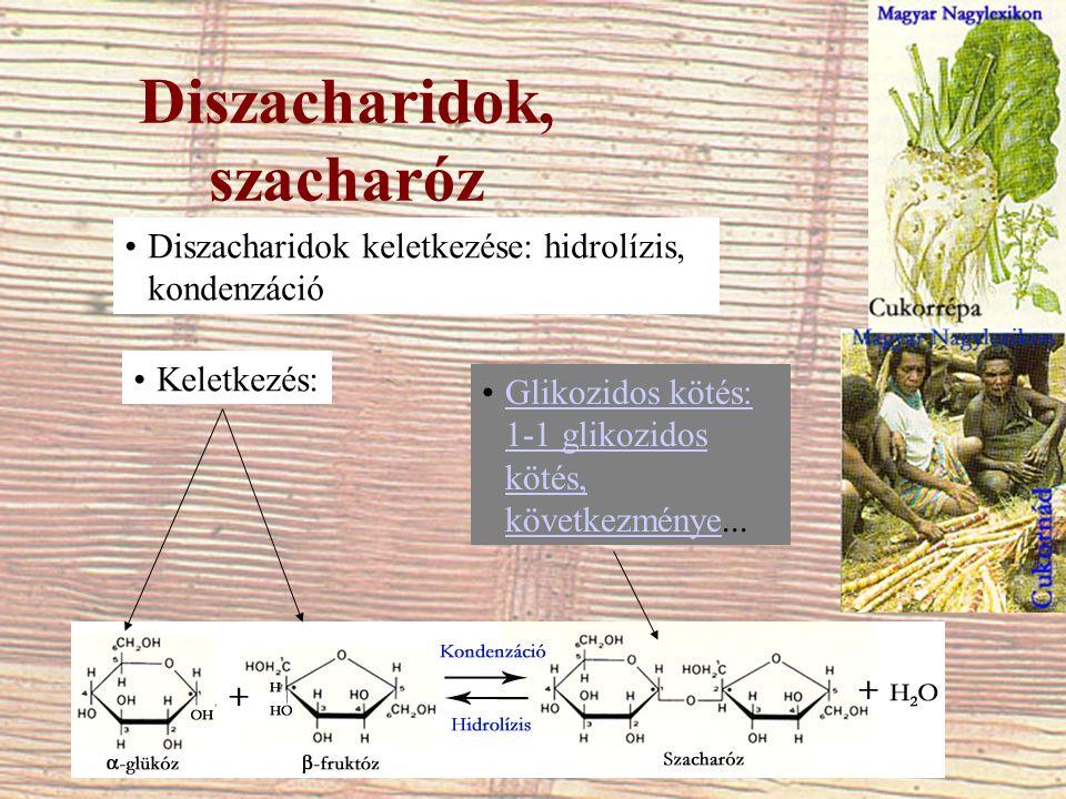Diszacharidok, szacharóz Diszacharidok keletkezése: hidrolízis, kondenzáció Keletkezés: Glikozidos kötés: 1-1 glikozidos kötés, következménye...Glikoz
