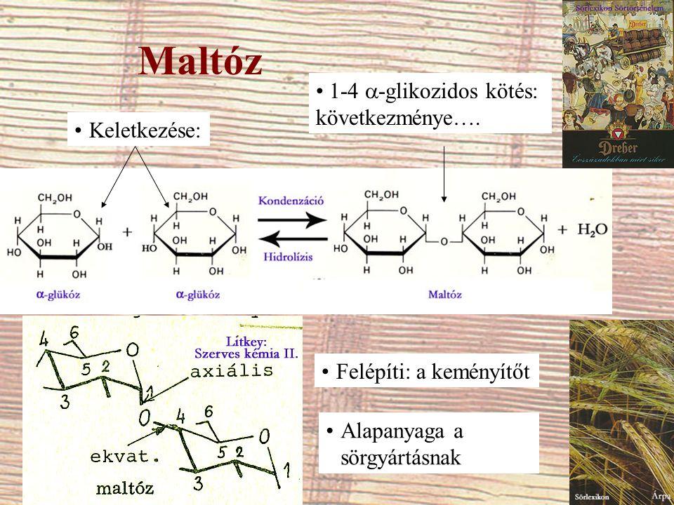 Maltóz Keletkezése: 1-4  -glikozidos kötés: következménye…. Felépíti: a keményítőt Alapanyaga a sörgyártásnak