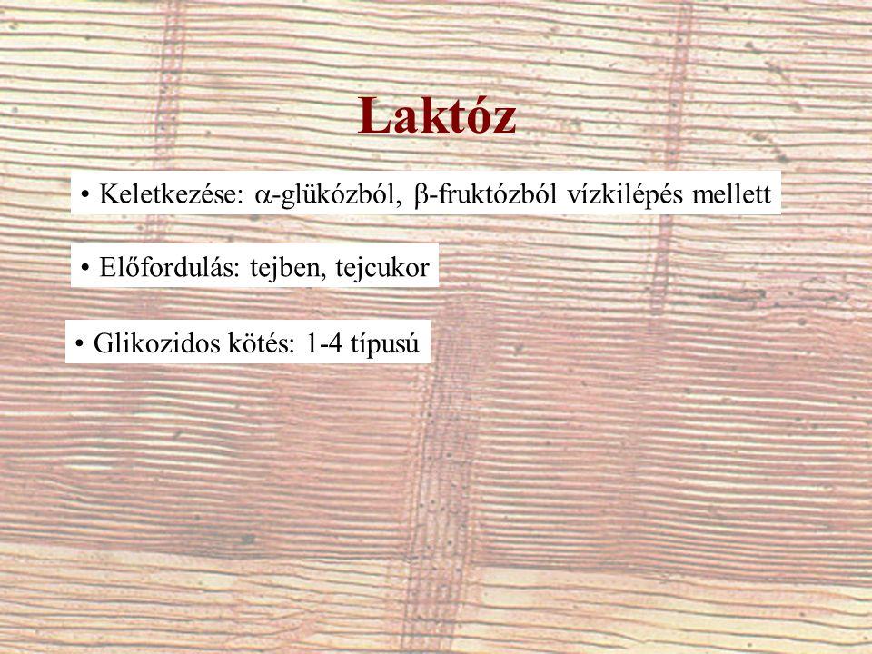 Laktóz Keletkezése:  -glükózból,  -fruktózból vízkilépés mellett Előfordulás: tejben, tejcukor Glikozidos kötés: 1-4 típusú