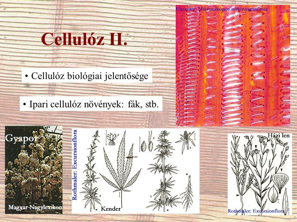 Cellulóz II. Cellulóz biológiai jelentősége Ipari cellulóz növények: fák, stb.