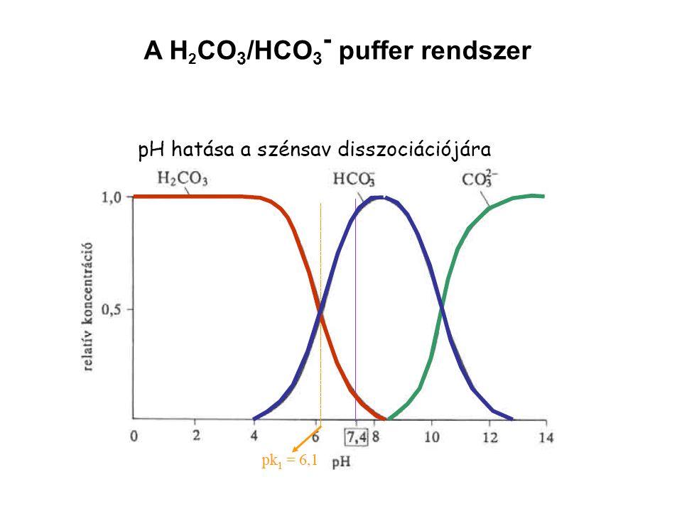 A H 2 CO 3 /HCO 3 - puffer rendszer
