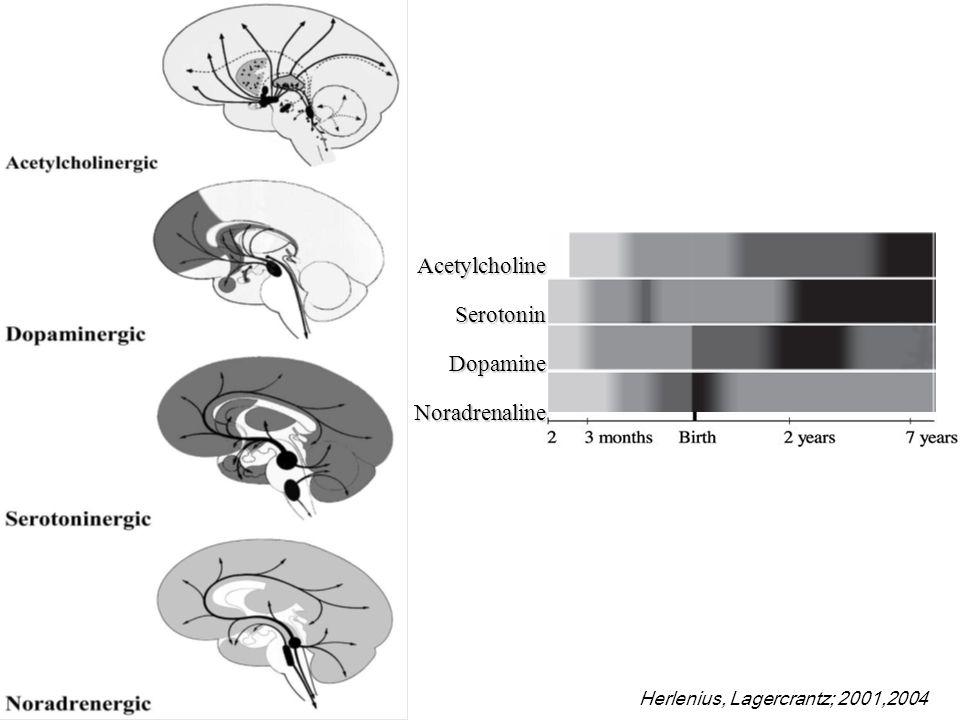 Herlenius, Lagercrantz; 2001,2004AcetylcholineSerotoninDopamineNoradrenaline E13, SN, VTA neocortex innervation E15