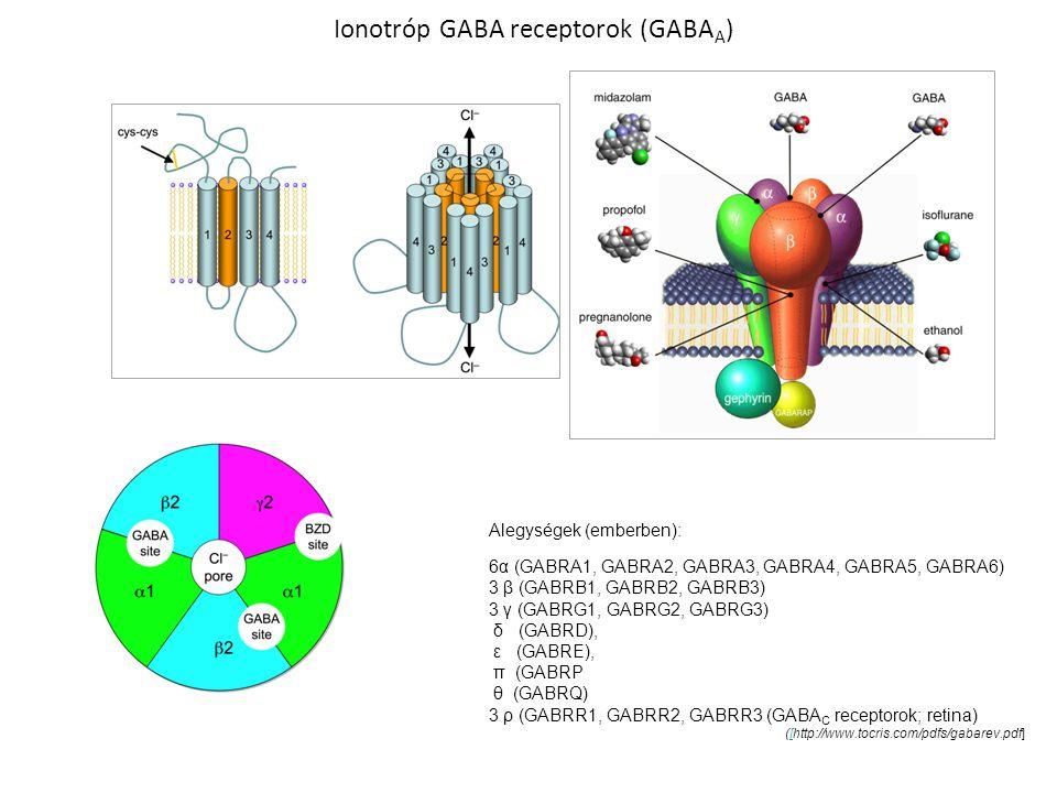 Ionotróp GABA receptorok (GABA A ) Alegységek (emberben): 6α (GABRA1, GABRA2, GABRA3, GABRA4, GABRA5, GABRA6) 3 β (GABRB1, GABRB2, GABRB3) 3 γ (GABRG1, GABRG2, GABRG3) δ (GABRD), ε (GABRE), π (GABRP θ (GABRQ) 3 ρ (GABRR1, GABRR2, GABRR3 (GABA C receptorok; retina) ([http://www.tocris.com/pdfs/gabarev.pdf][