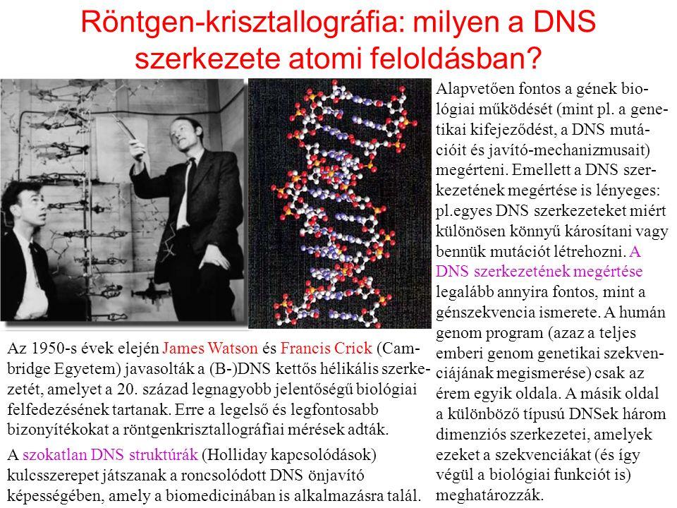 Röntgen-krisztallográfia: milyen a DNS szerkezete atomi feloldásban.