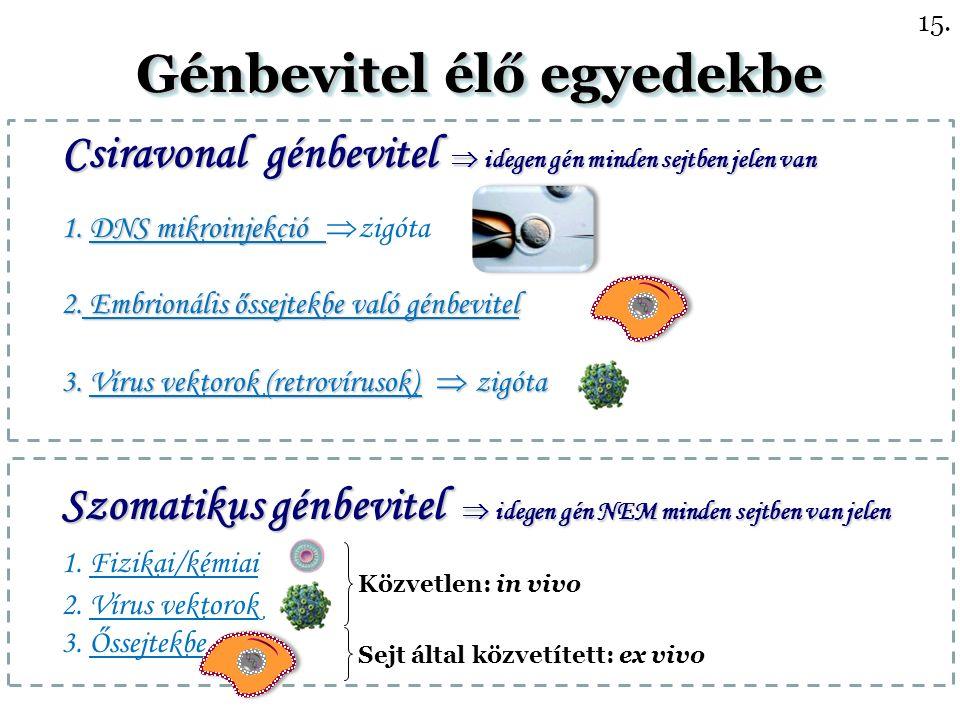Csiravonal génbevitel  idegen gén minden sejtben jelen van 1.