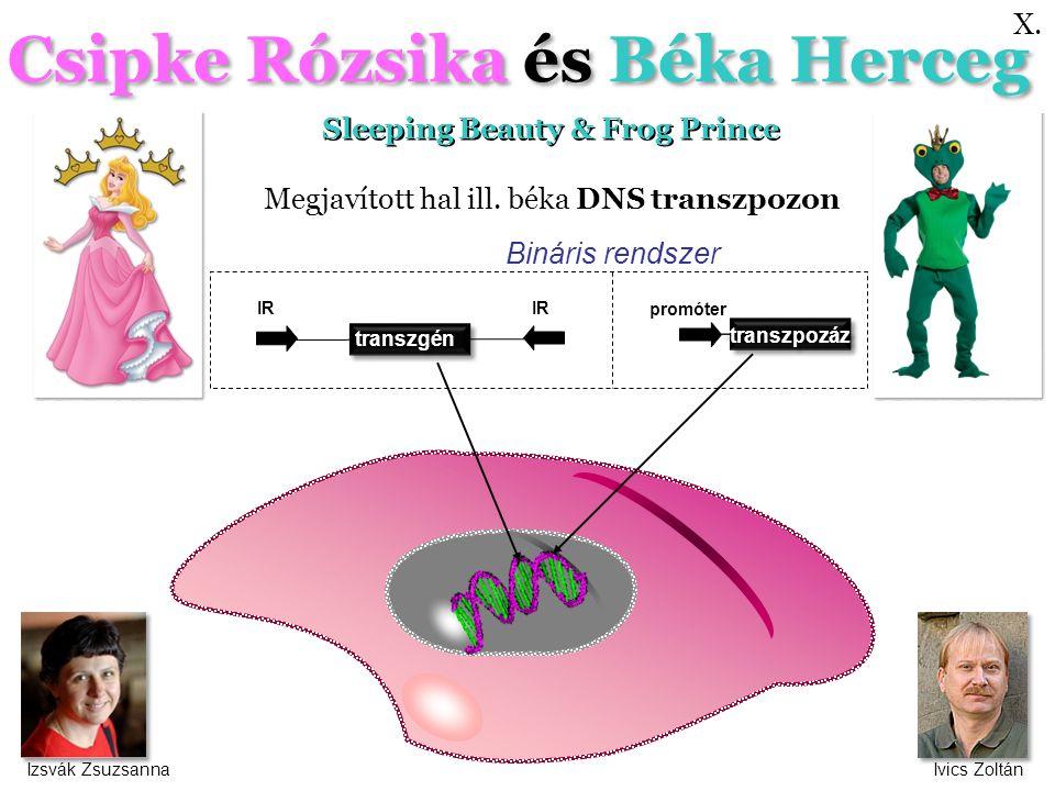 Csipke Rózsika és Béka Herceg Sleeping Beauty & Frog Prince transzgén IR transzpozáz promóter Bináris rendszer Megjavított hal ill.