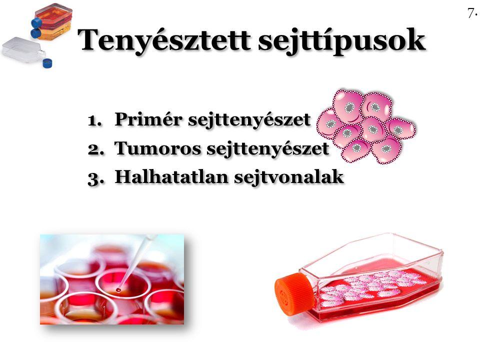 Tenyésztett sejttípusok 1.Primér sejttenyészet 2.Tumoros sejttenyészet 3.Halhatatlan sejtvonalak 1.Primér sejttenyészet 2.Tumoros sejttenyészet 3.Halhatatlan sejtvonalak 7.
