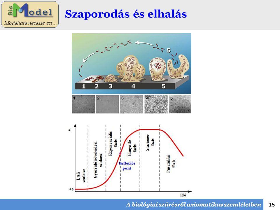 15 Modellare necesse est… Szaporodás és elhalás A biológiai szűrésről axiomatikus szemléletben