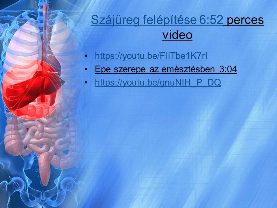 Szájüreg felépítése 6:52Szájüreg felépítése 6:52 perces video https://youtu.be/FIiTbe1K7rI Epe szerepe az emésztésben 3:04 https://youtu.be/gnuNIH_P_D
