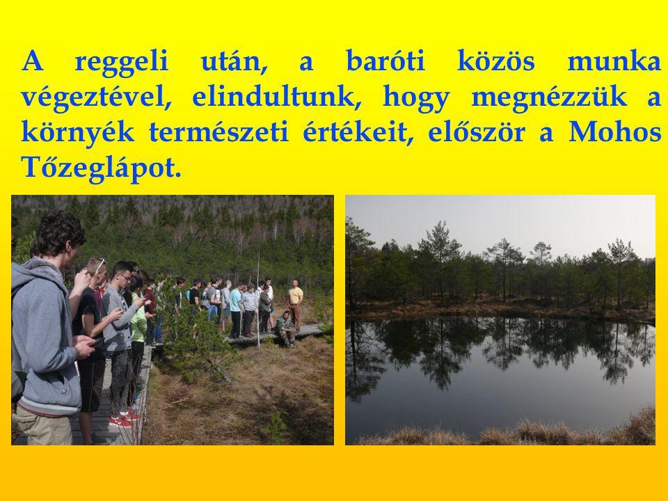 A reggeli után, a baróti közös munka végeztével, elindultunk, hogy megnézzük a környék természeti értékeit, először a Mohos Tőzeglápot.