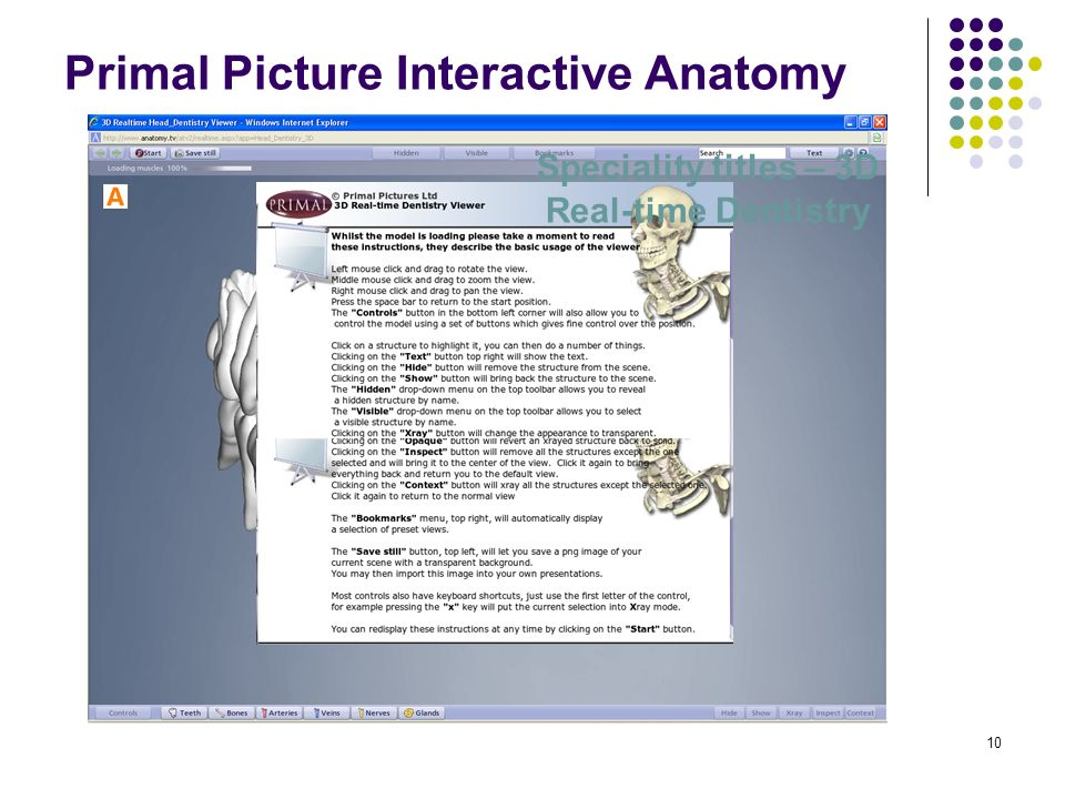 10 Primal Picture Interactive Anatomy Speciality titles – 3D Real-time Dentistry