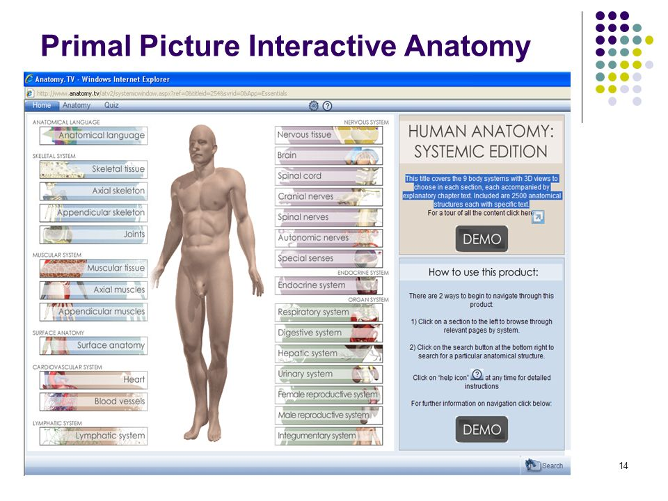 14 Primal Picture Interactive Anatomy