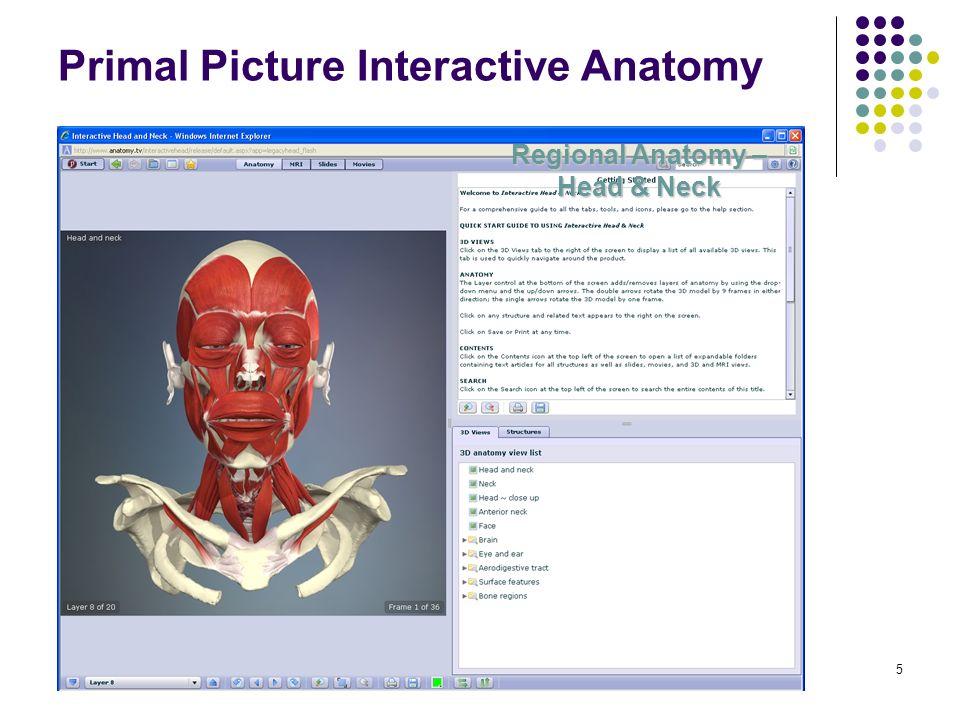 16 Teszteljük anatómiai tudásunkat! Anatomy.TV főoldalán: Product Quizes Az egyes modulokban