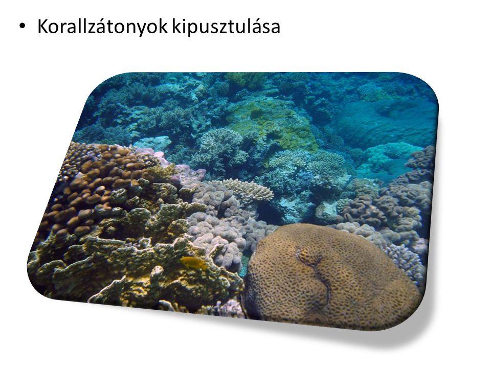 Korallzátonyok kipusztulása