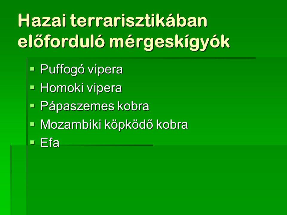Hazai terrarisztikában el ő forduló mérgeskígyók  Puffogó vipera  Homoki vipera  Pápaszemes kobra  Mozambiki köpködő kobra  Efa