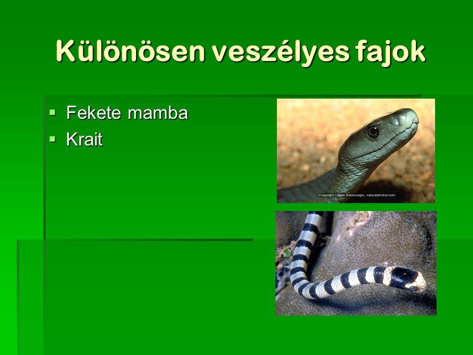 Különösen veszélyes fajok  Fekete mamba  Krait