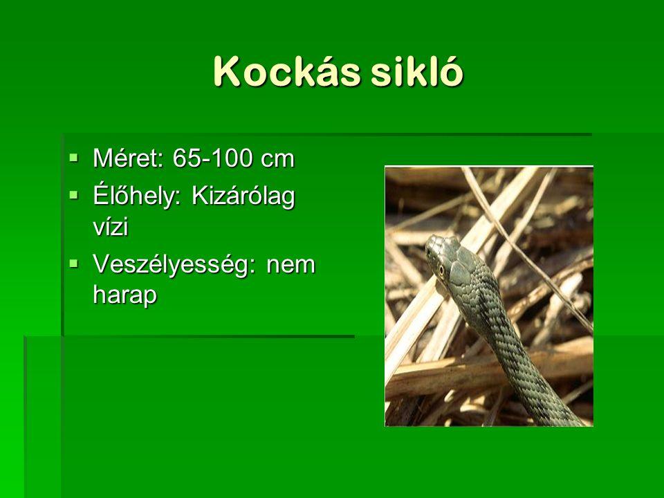 Kockás sikló  Méret: 65-100 cm  Élőhely: Kizárólag vízi  Veszélyesség: nem harap