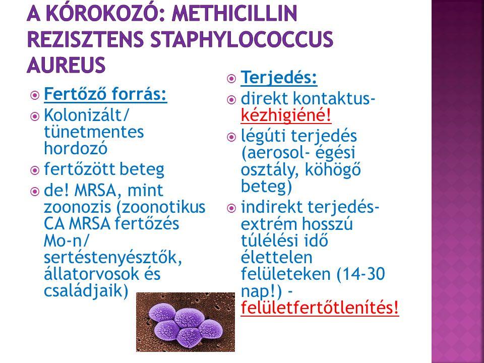  Jól körülhatárolt megbetegedési formák: sebfertőzés, bőr- és lágyrészfertőzés, szepszis, pneumónia  Kolonizáció/ hordozás:  tranziens  intermittáló  krónikus