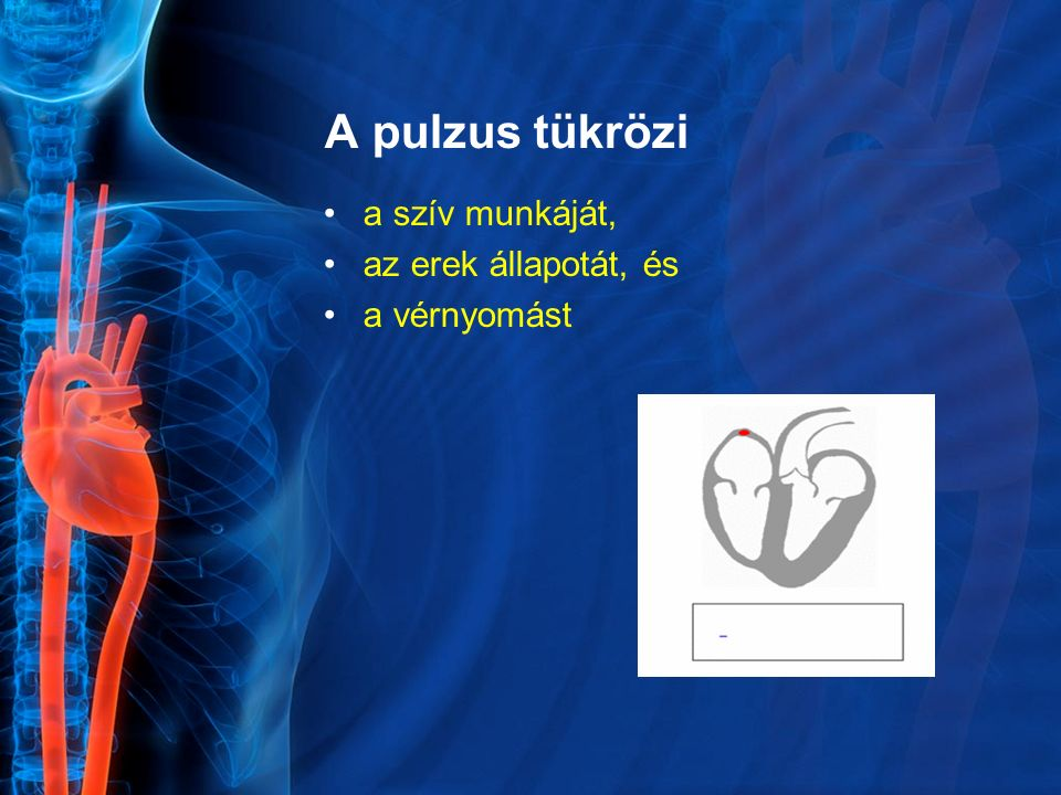 A pulzus tükrözi a szív munkáját, az erek állapotát, és a vérnyomást