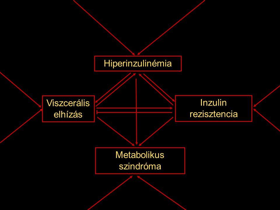Viszcerális elhízás Inzulin rezisztencia Hiperinzulinémia Metabolikus szindróma