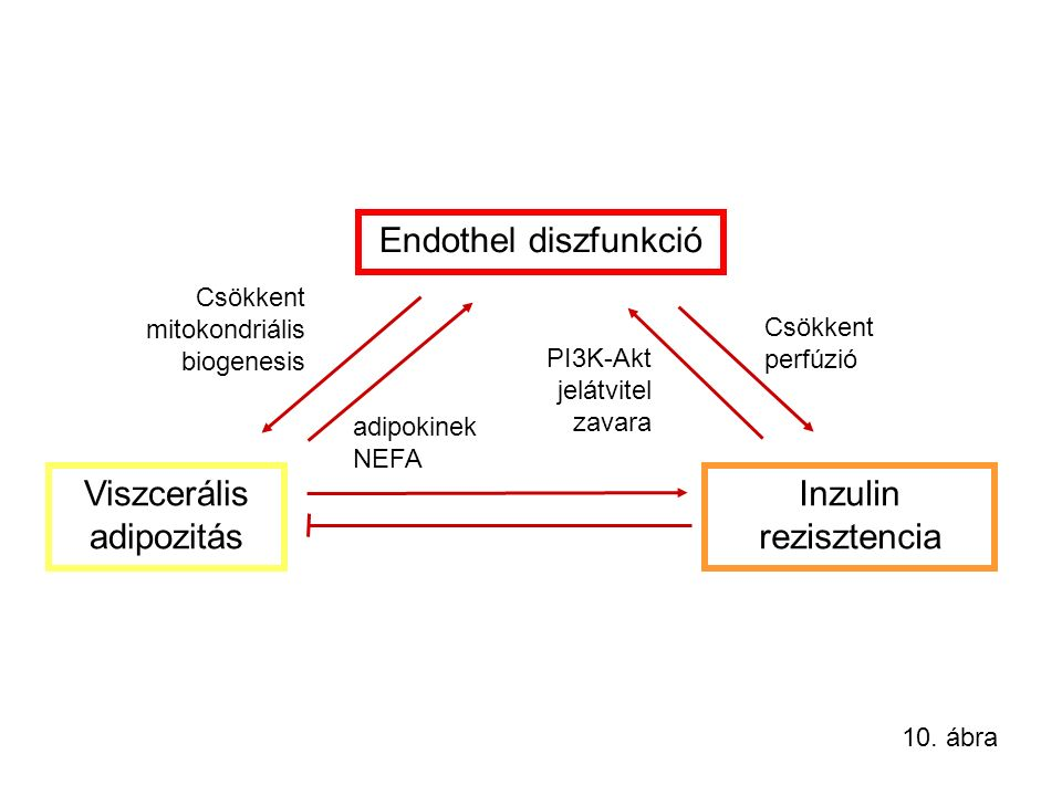 Sibutramine Efficacy Effects on Metabolic Parameters *P<0.001 for results seen in those patients receiving sibutramine All Sibutramine Treated All Placebo -4.0 (-10.0 cm) -1.6 (-4.0 cm) -3 -2.5 -2 -1.5 -0.5 0 Waist Circumference Mean Change (in.) -3.5 -4 -4.5 20.7 -18.5 11.2 - 3.75 -25 -20 -15 -10 -5 0 5 10 15 20 25 HDL-C* TG* Mean % Change James WPT, Lancet 2000; 356: 2119-25 Abbott Laboratories Data on File