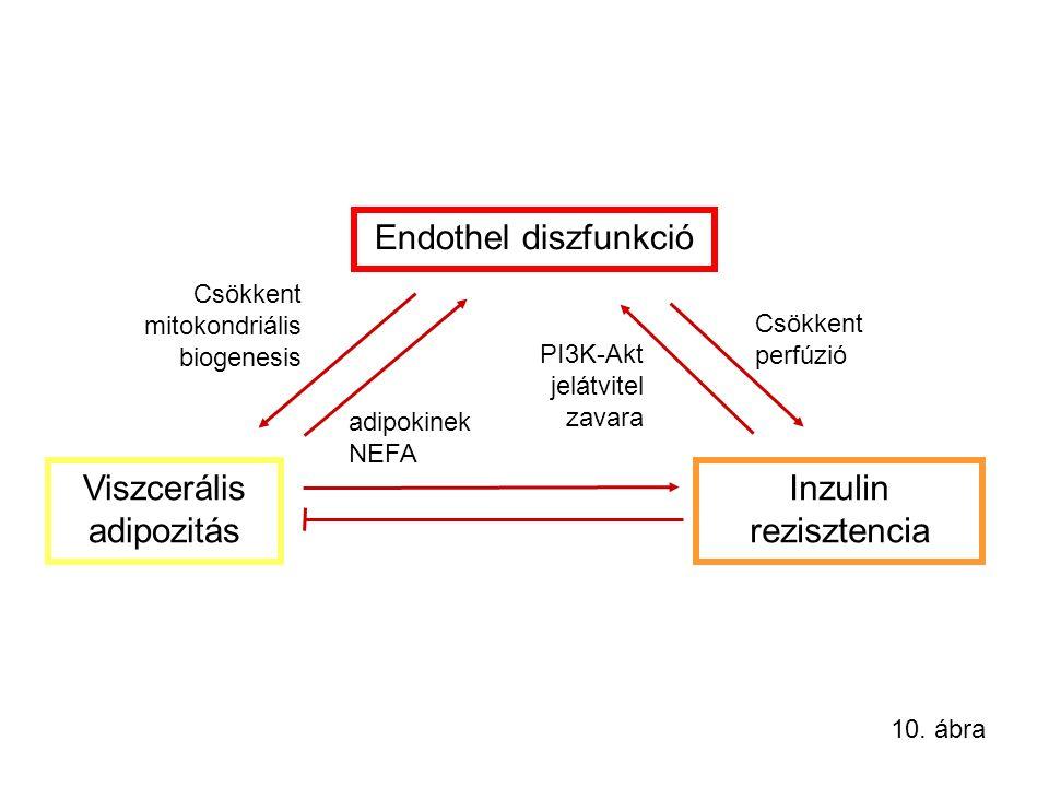 Viszcerális adipozitás Inzulin rezisztencia Endothel diszfunkció adipokinek NEFA Csökkent mitokondriális biogenesis Csökkent perfúzió PI3K-Akt jelátvitel zavara 10.