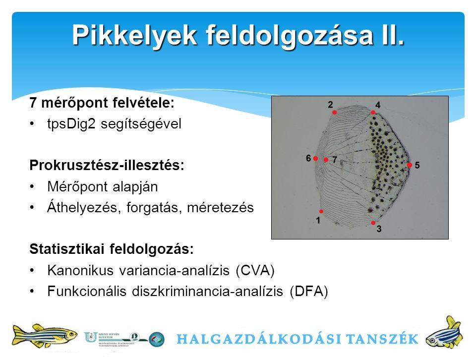 7 mérőpont felvétele: tpsDig2 segítségével Prokrusztész-illesztés: Mérőpont alapján Áthelyezés, forgatás, méretezés Statisztikai feldolgozás: Kanonikus variancia-analízis (CVA) Funkcionális diszkriminancia-analízis (DFA) Pikkelyek feldolgozása II.