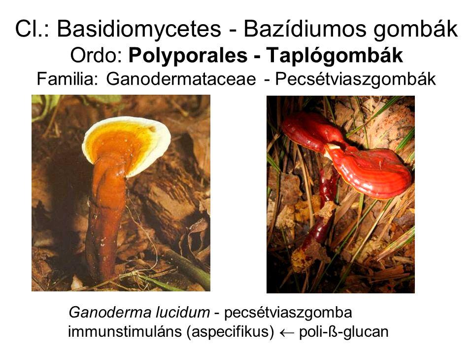 Cl.: Basidiomycetes - Bazídiumos gombák Ordo: Polyporales - Taplógombák Familia: Ganodermataceae - Pecsétviaszgombák Ganoderma lucidum - pecsétviaszgomba immunstimuláns (aspecifikus)  poli-ß-glucan