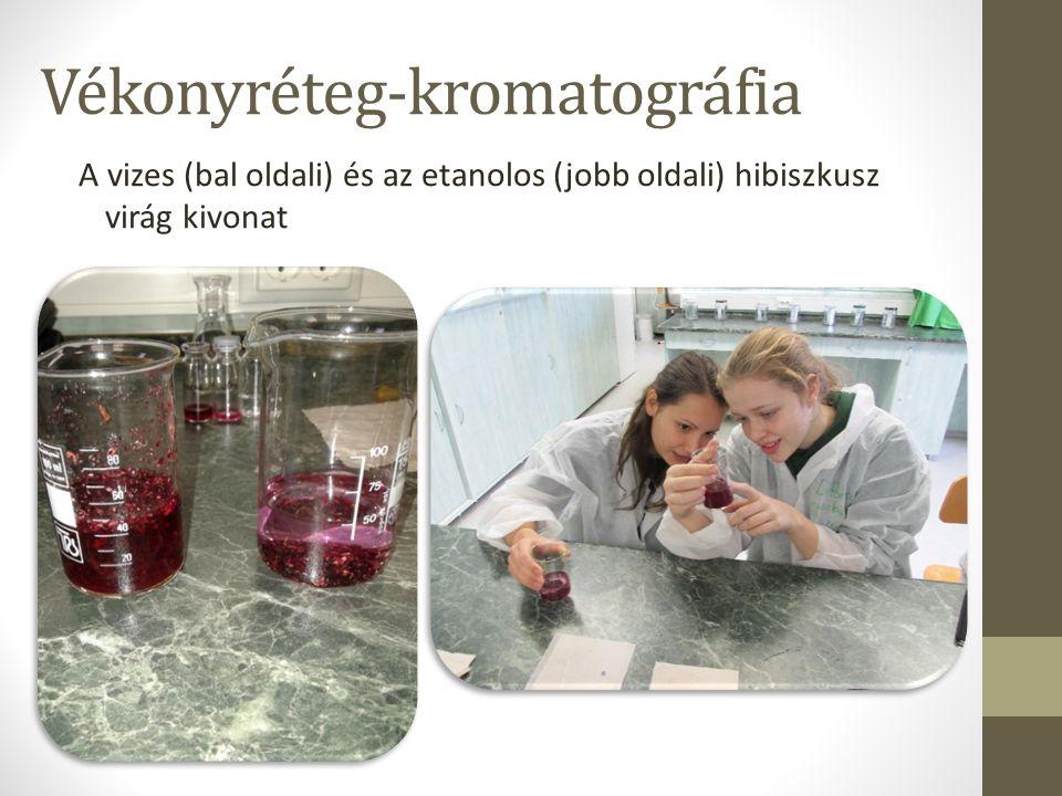 Vékonyréteg-kromatográfia A vizes (bal oldali) és az etanolos (jobb oldali) hibiszkusz virág kivonat