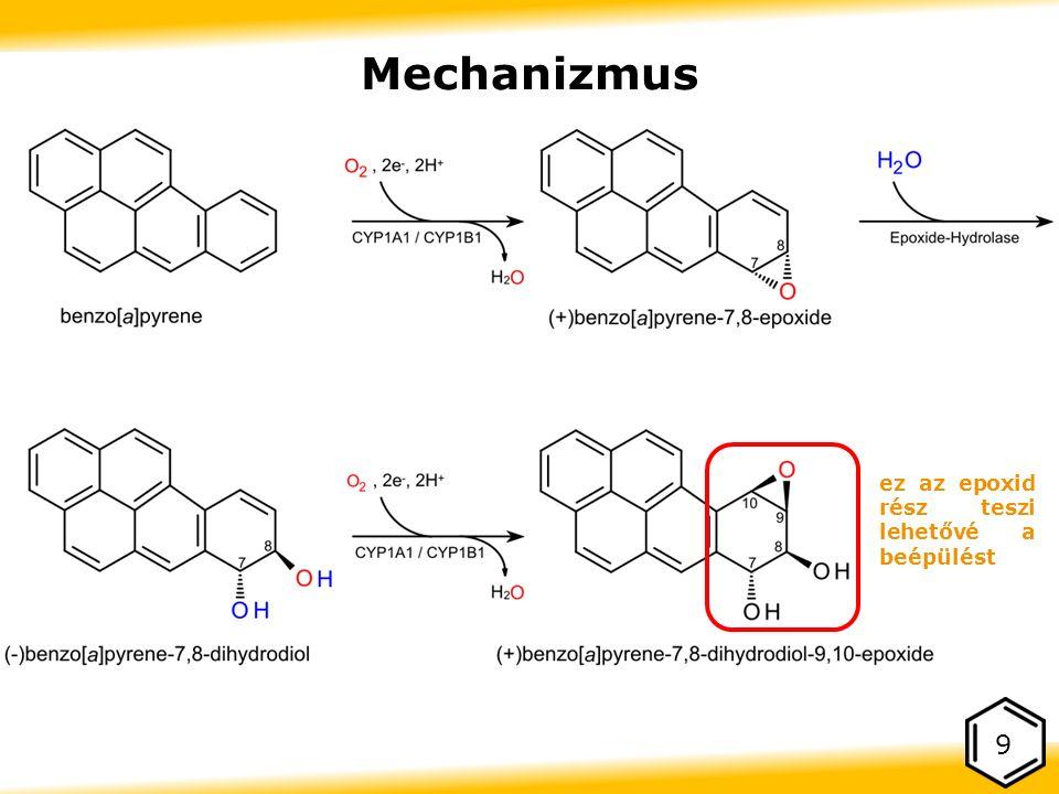 Mechanizmus 9 ez az epoxid rész teszi lehetővé a beépülést