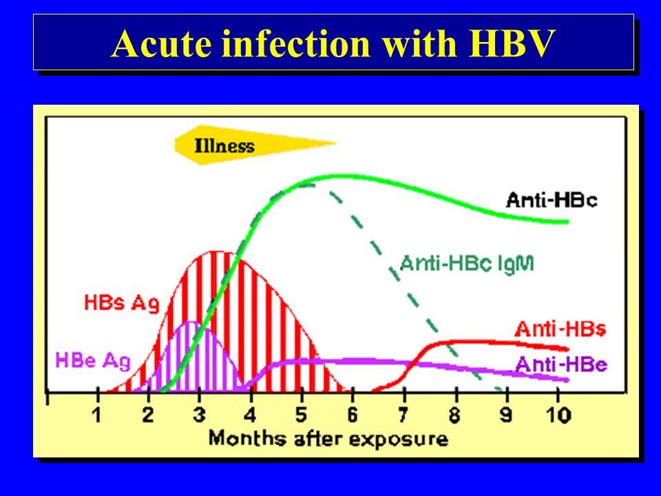 A hepatitis B fertőzés fő rizikó csoportjai HBsAg hordozók sexuális partnerei HBsAg hordozó anyák újszülöttei Homosexuálisok Iv.