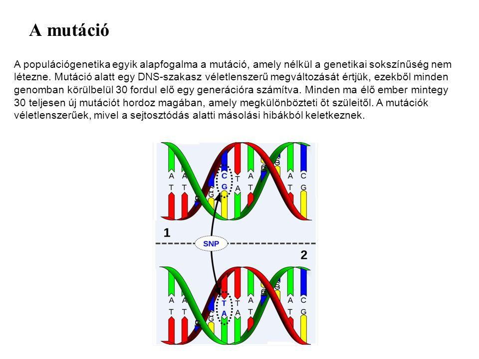 A mutáció A populációgenetika egyik alapfogalma a mutáció, amely nélkül a genetikai sokszínűség nem létezne. Mutáció alatt egy DNS-szakasz véletlensze