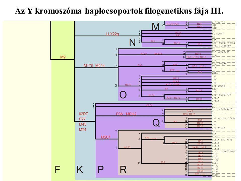 Az Y kromoszóma haplocsoportok filogenetikus fája III.