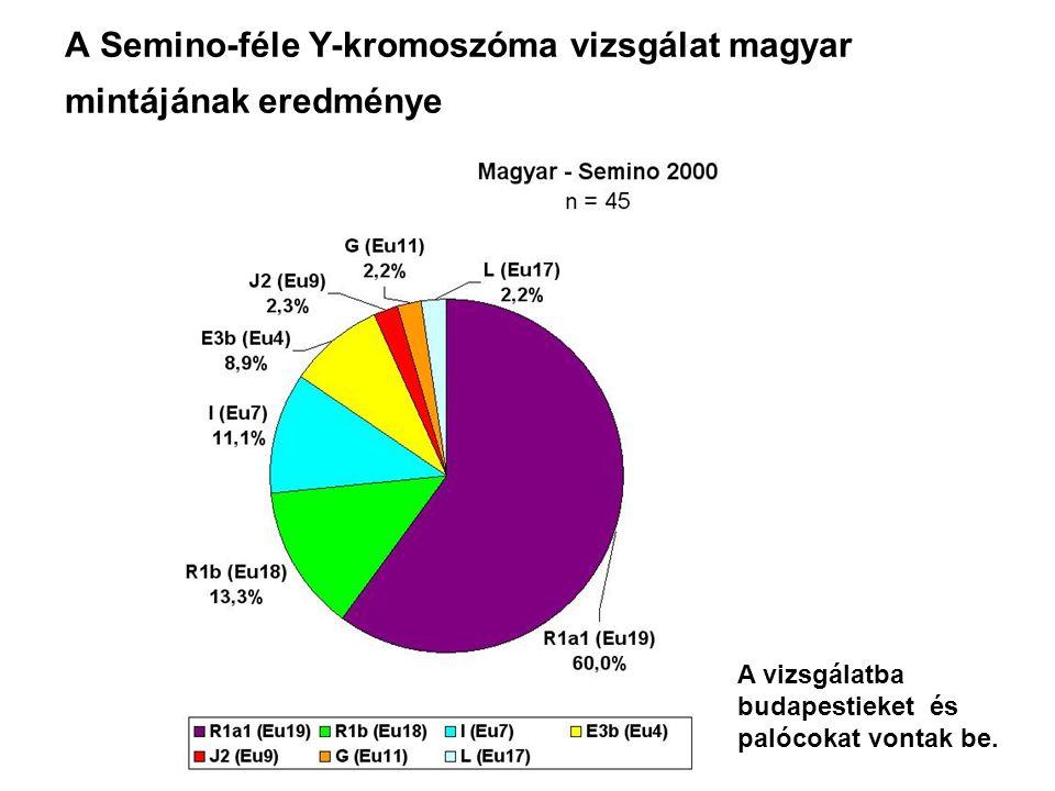 A Semino-féle Y-kromoszóma vizsgálat magyar mintájának eredménye A vizsgálatba budapestieket és palócokat vontak be.