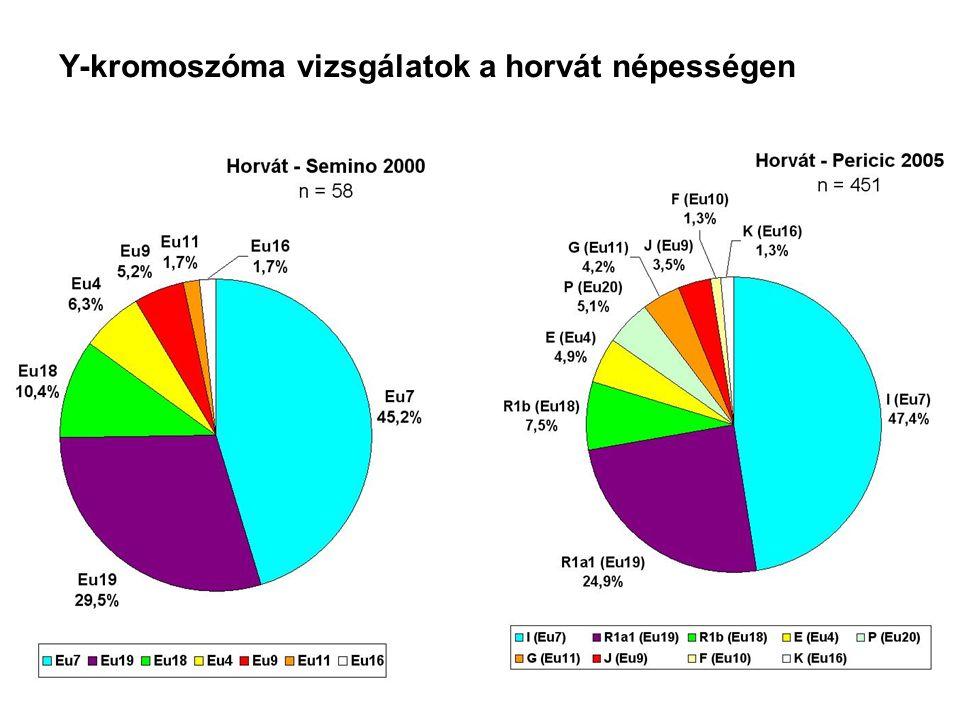 Y-kromoszóma vizsgálatok a horvát népességen