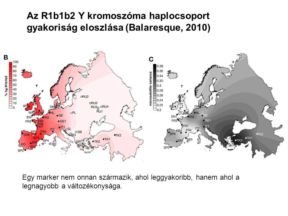 Az R1b1b2 Y kromoszóma haplocsoport gyakoriság eloszlása (Balaresque, 2010) Egy marker nem onnan származik, ahol leggyakoribb, hanem ahol a legnagyobb