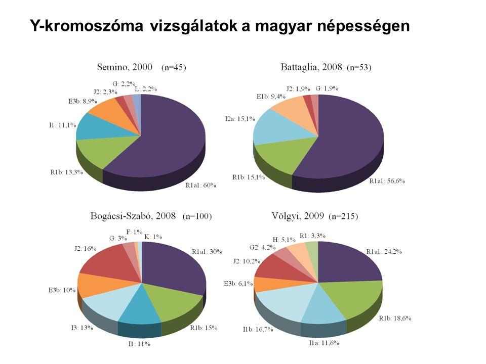 Y-kromoszóma vizsgálatok a magyar népességen